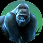 jungle gorilla icon